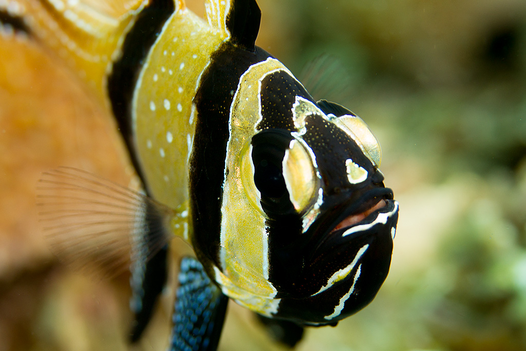 10 Best Saltwater Fish To Keep In Your Nano Reef Aquarium