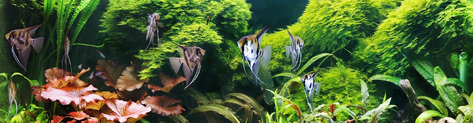 Take Your Hobby To The Next Level With A Biotope Aquarium - Big Al's Pets
