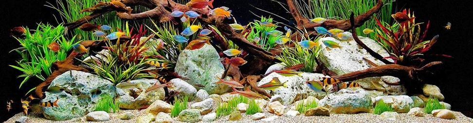 Top 10 Most Colorful Freshwater Fish - Big Al's Pets