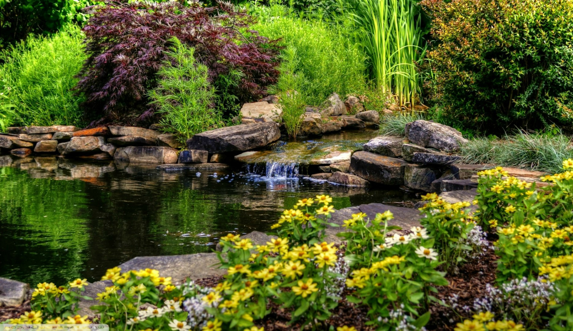 A Step-By-Step Guide To Opening Your Pond This Season