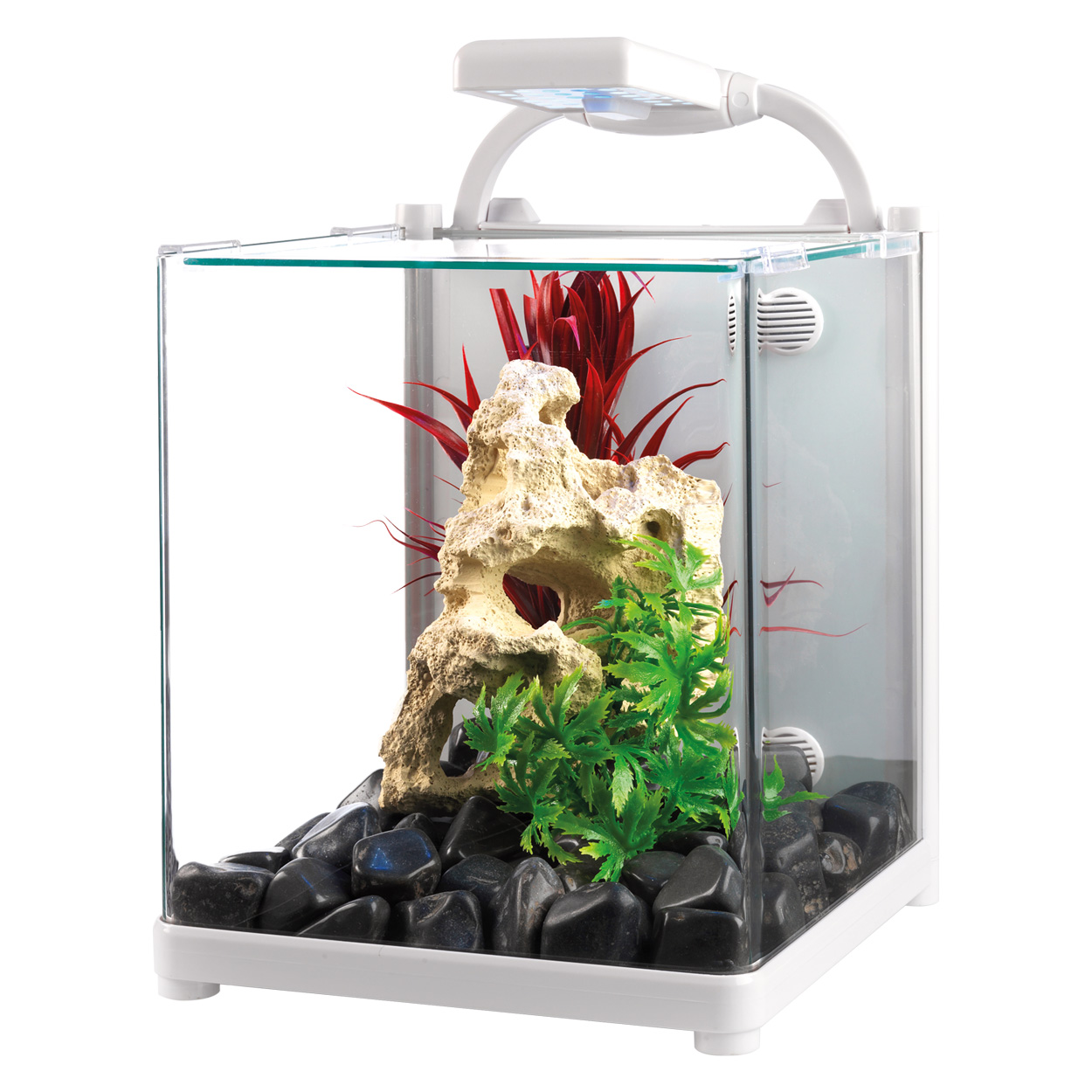 Fish tank care and maintenance 3 gallon 2017 fish tank for Fish for 2 gallon tank